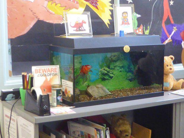 Photo of a goldfish in an aquarium